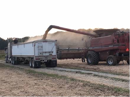 Caption:  Soybeans being unloaded fall 2019 Photo by Greg Drake II