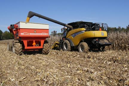 Fresh picked corn going into the grain cart.