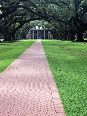 Oak Alley is named for the 300-year-old Virginia live oaks that border the walk way up to the Big House.
