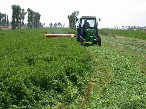 Alfalfa being harvested.